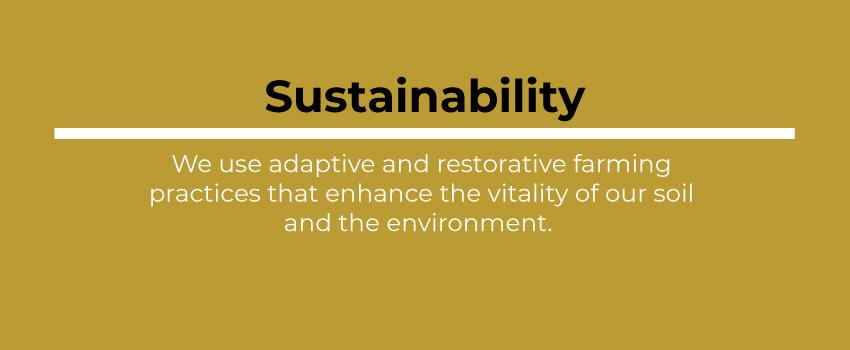 SustainabilityBox